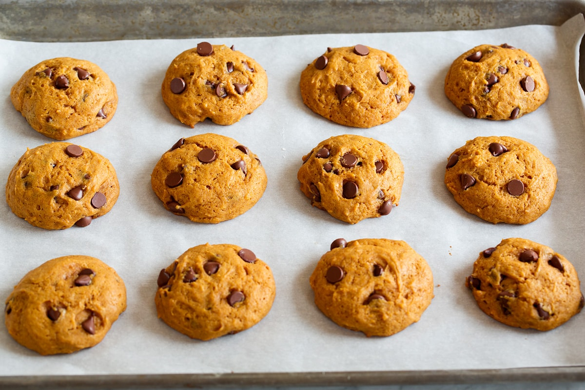 Twelve pumpkin chocolate chip cookies shown on a baking sheet on parchment paper after baking.