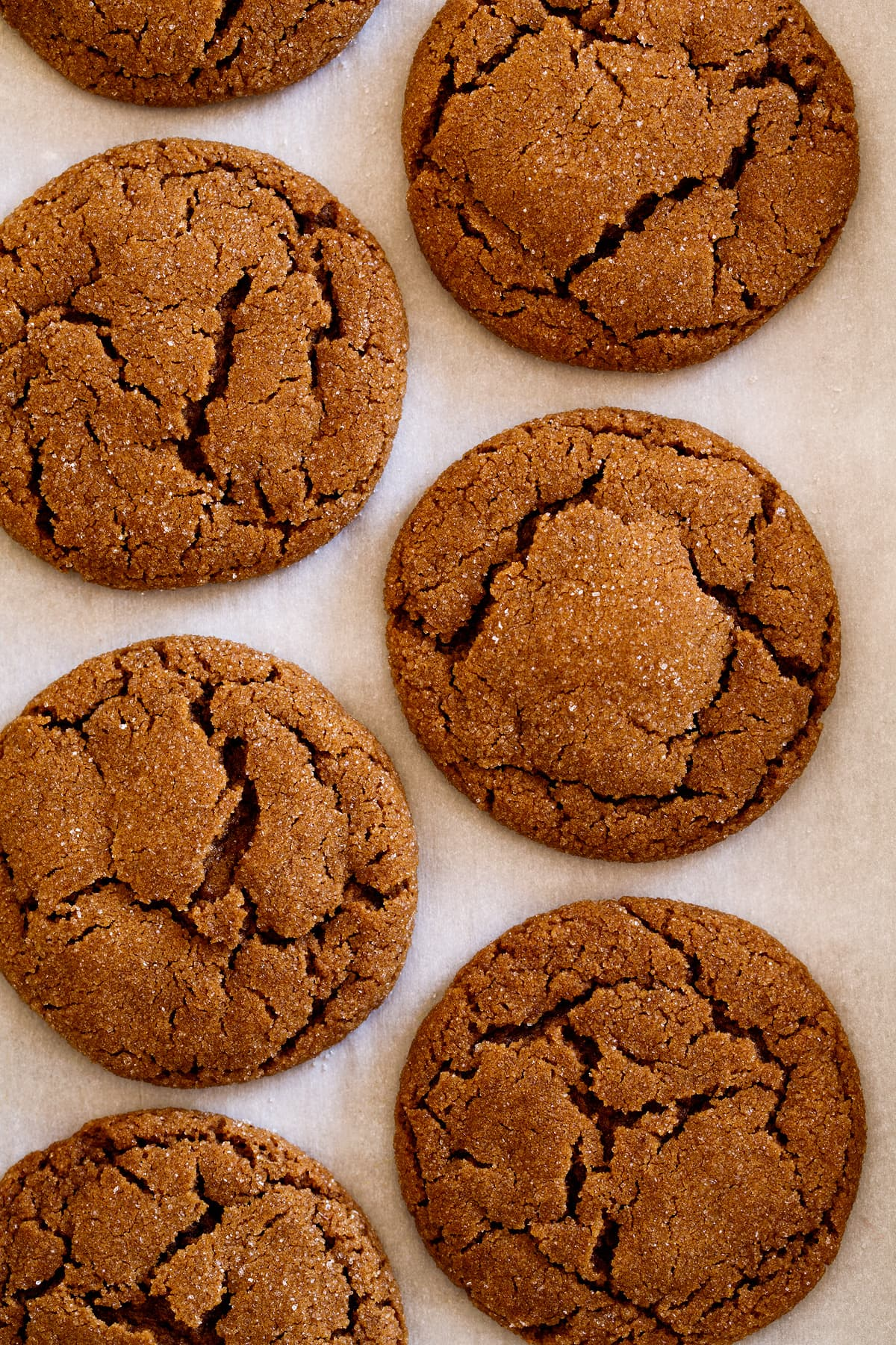 Overhead close up image of molasses cookies on parchment paper.